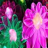 Fantastic flower garden p…