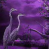 Pelicans on the moonlight…