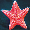 Red sea star slide puzzle
