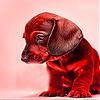 Shy puppy slide puzzle